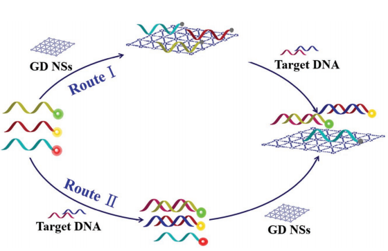 124.Few-Layer Graphdiyne Nanosheets Applied for Multiplexed Real-Time DNA Detection